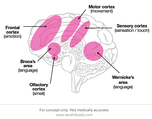 neuroscience-brain-on-fiction